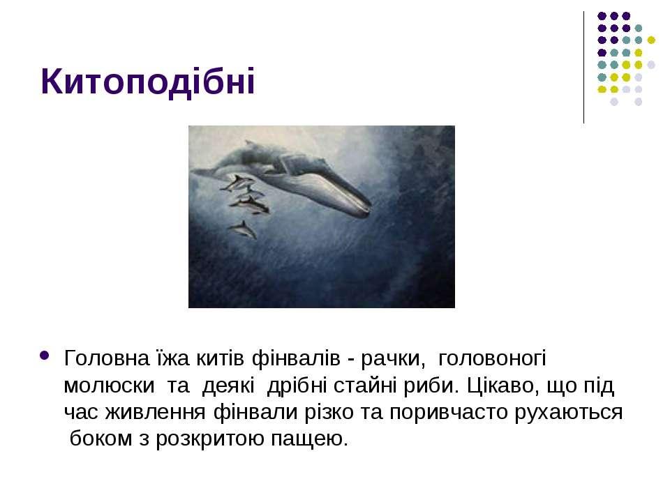 Китоподібні Головна ïжа китів фінвалів - рачки, головоногi молюски та деяк...