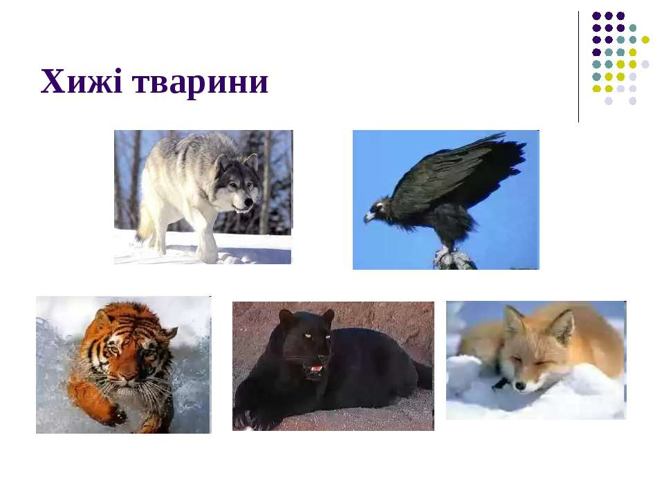 Хижі тварини