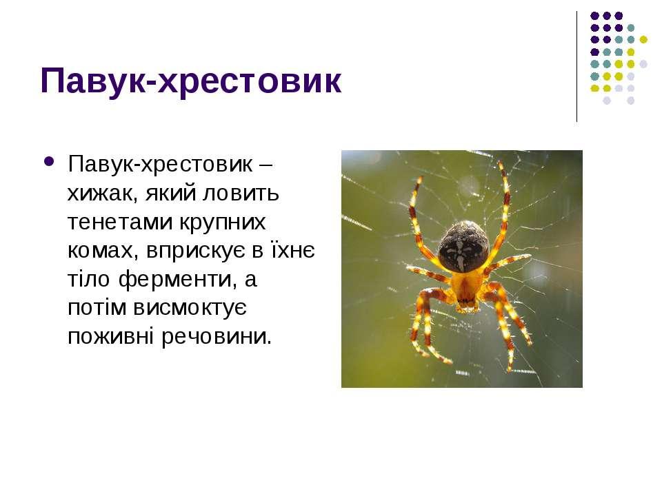 Павук-хрестовик Павук-хрестовик – хижак, який ловить тенетами крупних комах, ...