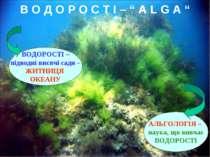 """В О Д О Р О С Т І – """" А L G A """" ВОДОРОСТІ – підводні висячі сади – ЖИТНИЦЯ ОК..."""