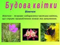 Віночок Віночок – яскраво забарвлена частина квітки, що сприяє привабленню ко...