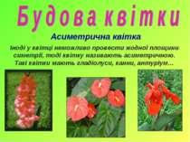 Асиметрична квітка Іноді у квітці неможливо провести жодної площини симетрії,...