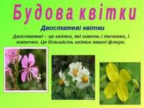 Двостатеві квітки Двостатеві – це квітки, які мають і тичинки, і маточки. Це ...