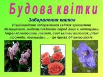 Забарвлення квіток Різноманітне забарвлення квіток зумовлене пігментами, найв...