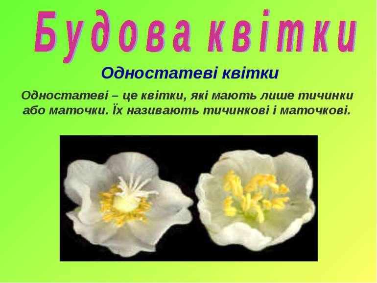Одностатеві – це квітки, які мають лише тичинки або маточки. Їх називають тич...