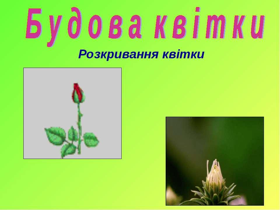 Розкривання квітки