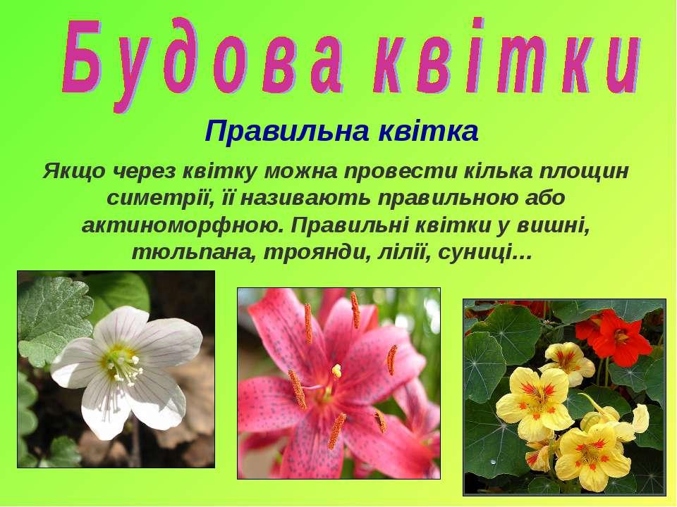 Якщо через квітку можна провести кілька площин симетрії, її називають правиль...