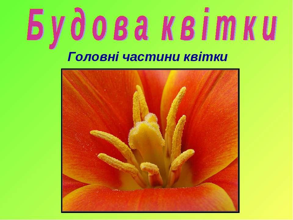 Головні частини квітки