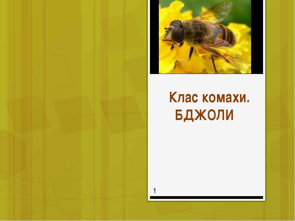 Клас комахи. БДЖОЛИ