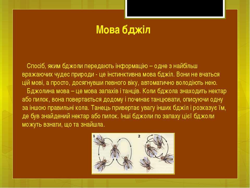 Спосіб, яким бджоли передають інформацію – одне з найбільш вражаючих чудес пр...