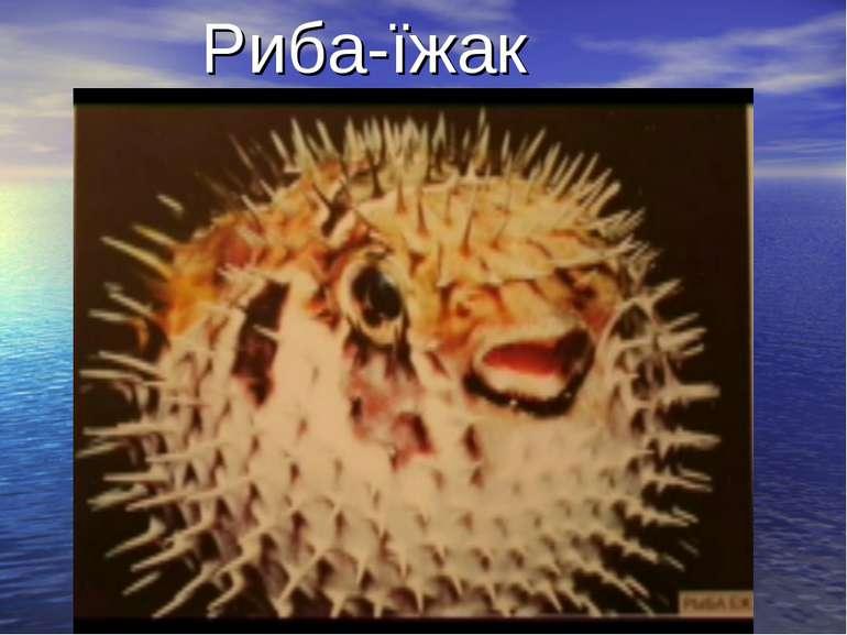 Риба-їжак