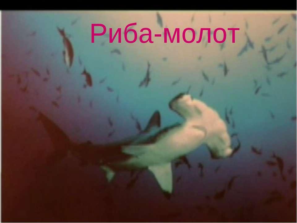 Риба-молот