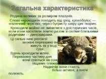 Родина великих за розміром плазунів. Слово «крокодил» походить від грец. κροκ...