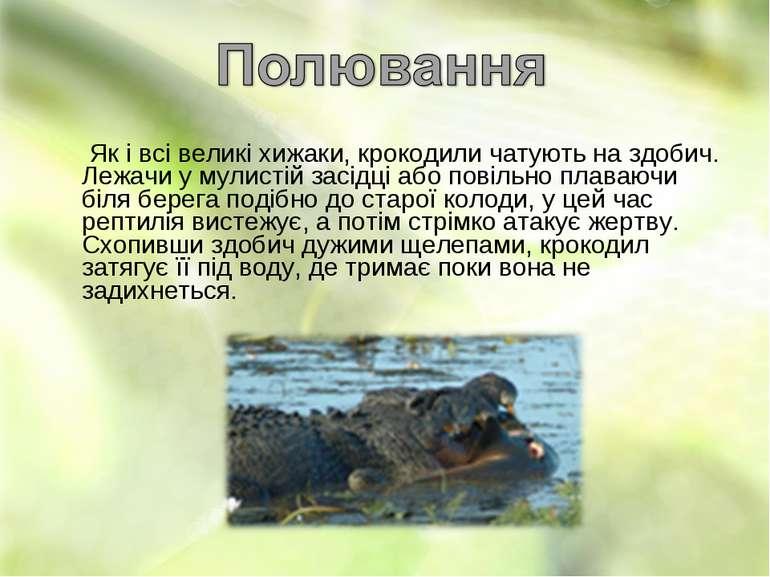 Як і всі великі хижаки, крокодили чатують на здобич. Лежачи у мулистій засідц...