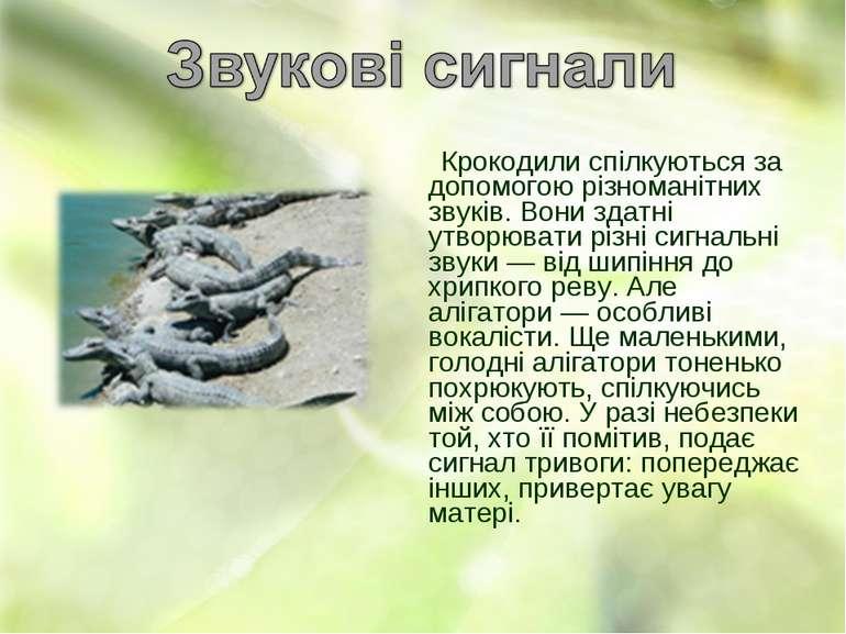 Крокодили спілкуються за допомогою різноманітних звуків. Вони здатні утворюва...