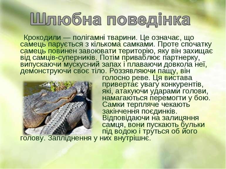 Крокодили— полігамні тварини. Це означає, що самець парується з кількома сам...