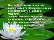 Настій білосніжних пелюсток, відвар квіток та відвар кореневища використовуют...