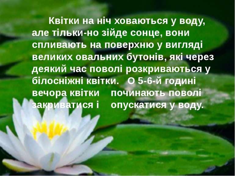 Квітки на ніч ховаються у воду, але тільки-но зійде сонце, вони спливають на ...