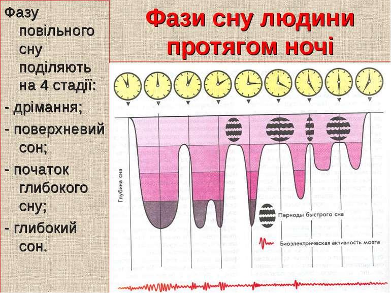 Фази сну людини протягом ночі Фазу повільного сну поділяють на 4 стадії: - др...