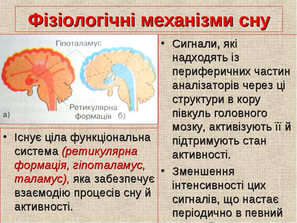 Фізіологічні механізми сну Існує ціла функціональна система (ретикулярна форм...