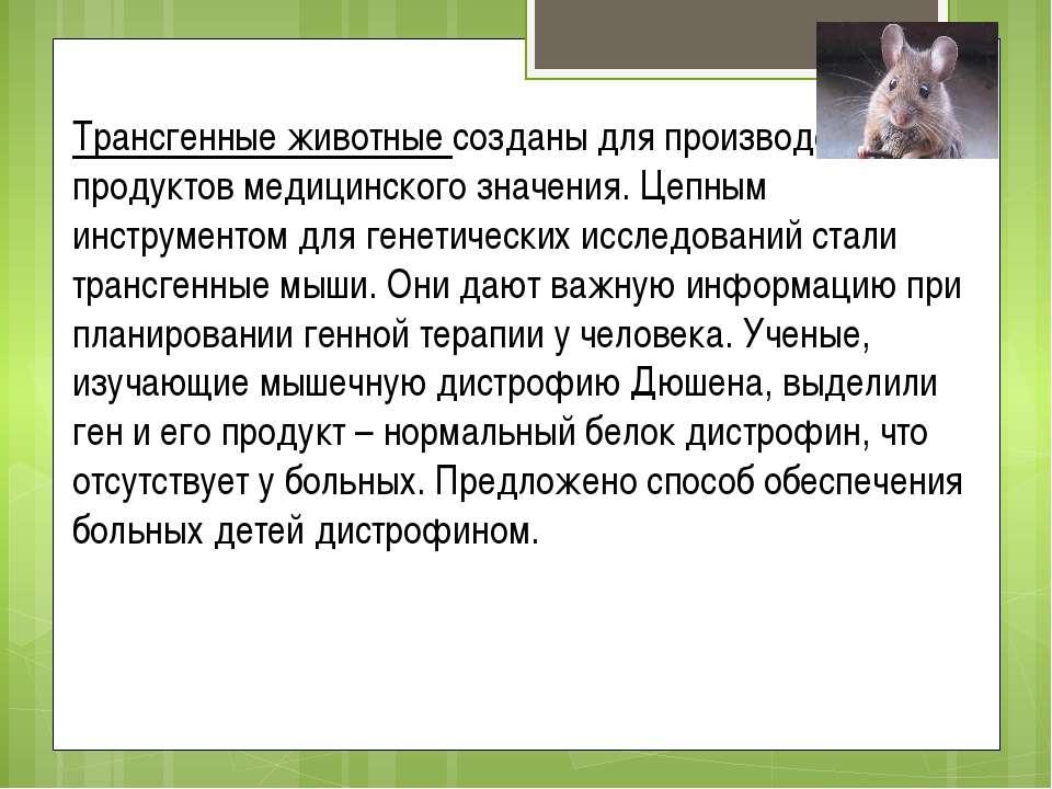 Трансгенные животные созданы для производства продуктов медицинского значения...