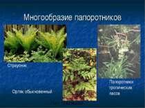Многообразие папоротников Страусник Орляк обыкновенный Папоротники тропически...
