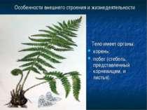 Особенности внешнего строения и жизнедеятельности Тело имеет органы: корень; ...