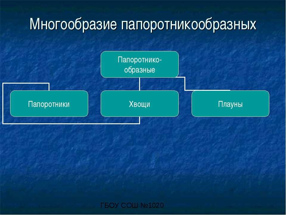Многообразие папоротникообразных ГБОУ СОШ №1020