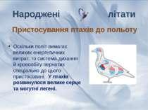 Оскільки політ вимагає великих енергетичних витрат, то система дихання й кров...