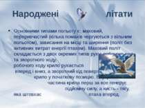 Основними типами польоту є: маховий, переривчастий (кілька помахів чергуються...