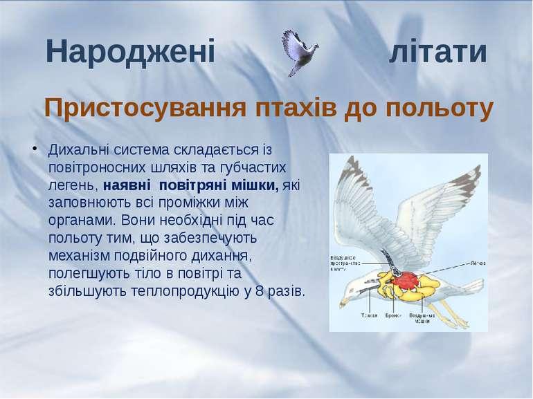 Дихальні система складається із повітроносних шляхів та губчастих легень, ная...
