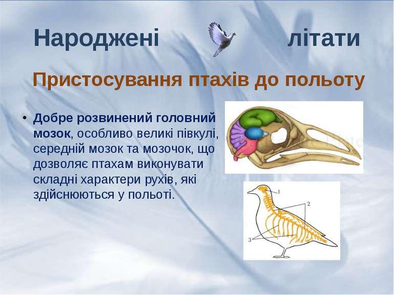 Добре розвинений головний мозок, особливо великі півкулі, середній мозок та м...