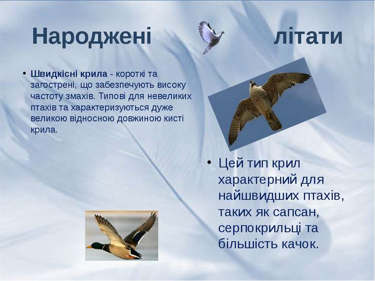 Швидкісні крила- короткі та загострені, що забезпечують високу частоту змахі...