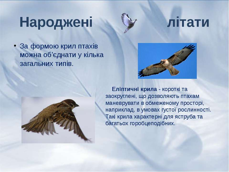 За формою крил птахів можна об'єднати у кілька загальних типів. Народжені літ...