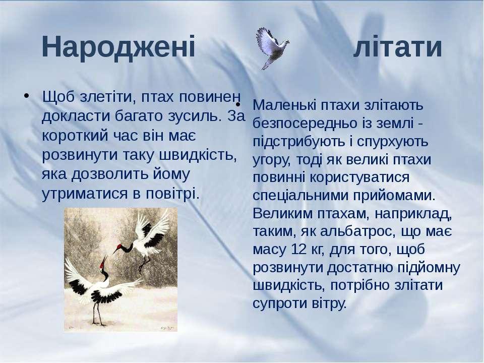 Щоб злетіти, птах повинен докласти багато зусиль. За короткий час він має роз...