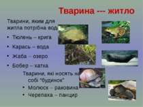 Тварини, яким для житла потрібна вода Тюлень – крига Карась – вода Жаба – озе...