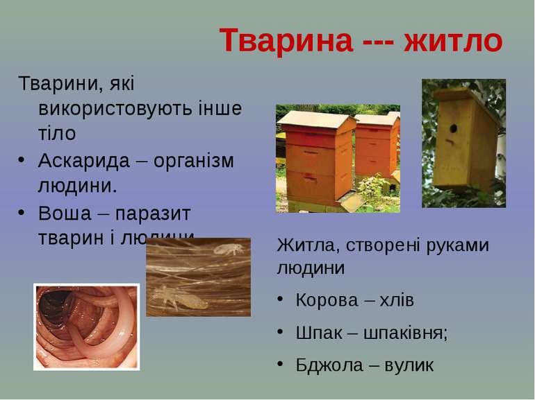 Житла, створені руками людини Корова – хлів Шпак – шпаківня; Бджола – вулик Т...