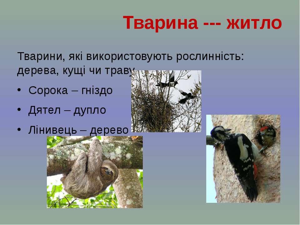 Тварини, які використовують рослинність: дерева, кущі чи траву Сорока – гнізд...