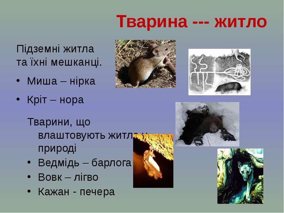 Підземні житла та їхні мешканці. Миша – нірка Кріт – нора Тварина --- житло Т...