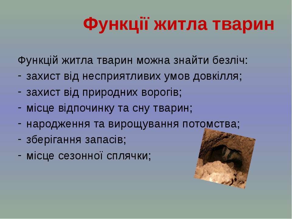 Функцій житла тварин можна знайти безліч: захист від несприятливих умов довкі...
