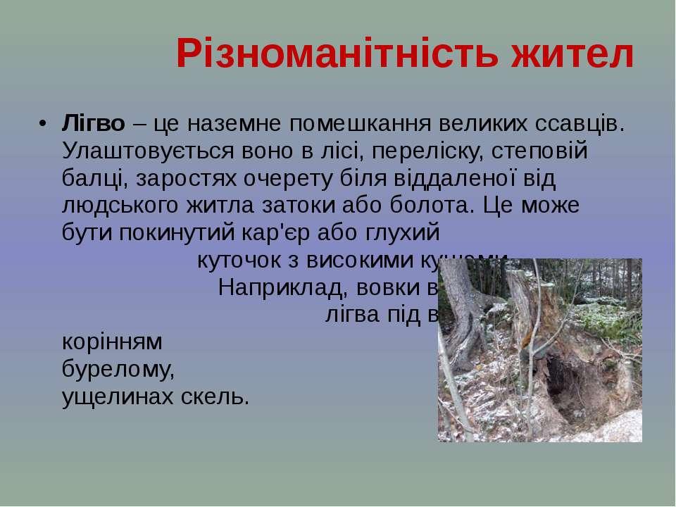 Лігво – це наземне помешкання великих ссавців. Улаштовується воно в лісі, пер...