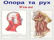 М'язи шиї