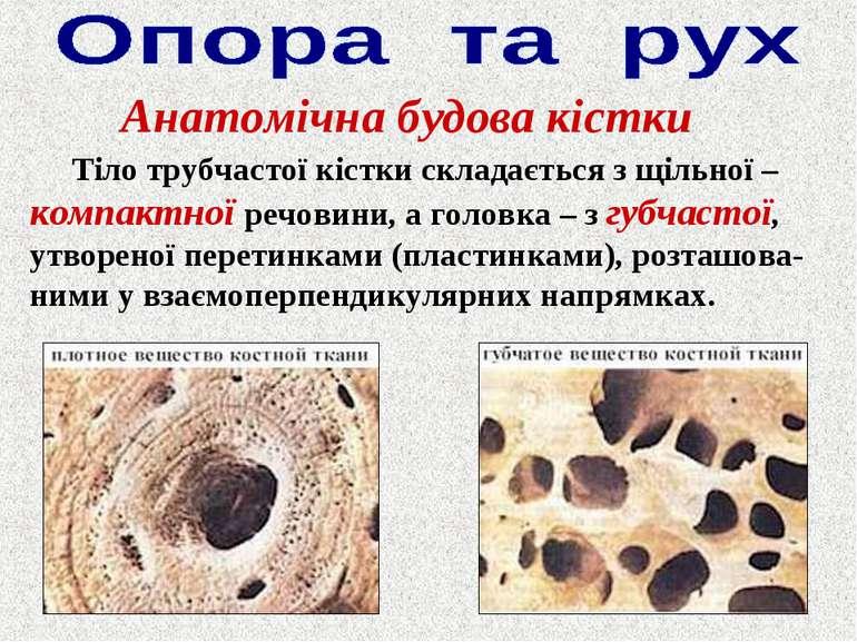 Анатомічна будова кістки Тіло трубчастої кістки складається з щільної – компа...