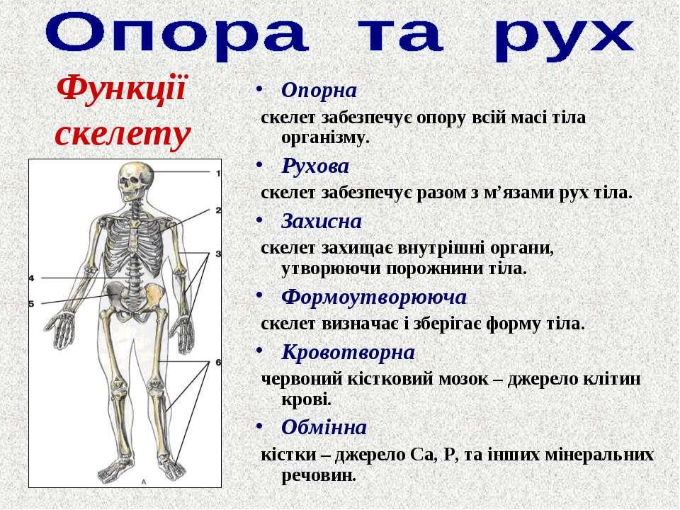 Опорна скелет забезпечує опору всій масі тіла організму. Рухова скелет забезп...