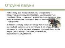 Отруйні павуки Небезпеку для людини можуть створювати і представники павуків-...