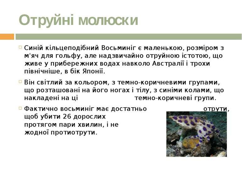 Отруйні молюски Синій кільцеподібний Восьминіг є маленькою, розміром з м'яч д...