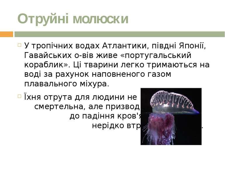 Отруйні молюски У тропічних водах Атлантики, півдні Японії, Гавайських о-вів ...