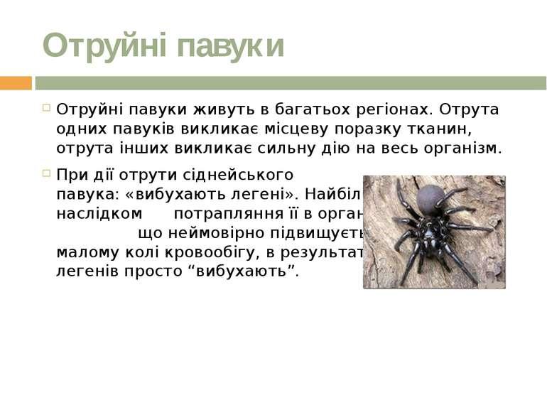Отруйні павуки Отруйні павуки живуть в багатьох регіонах. Отрута одних павукі...