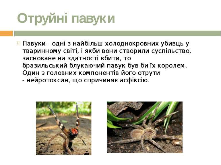 Отруйні павуки Павуки - одні з найбільш холоднокровних убивцьу тваринномусв...