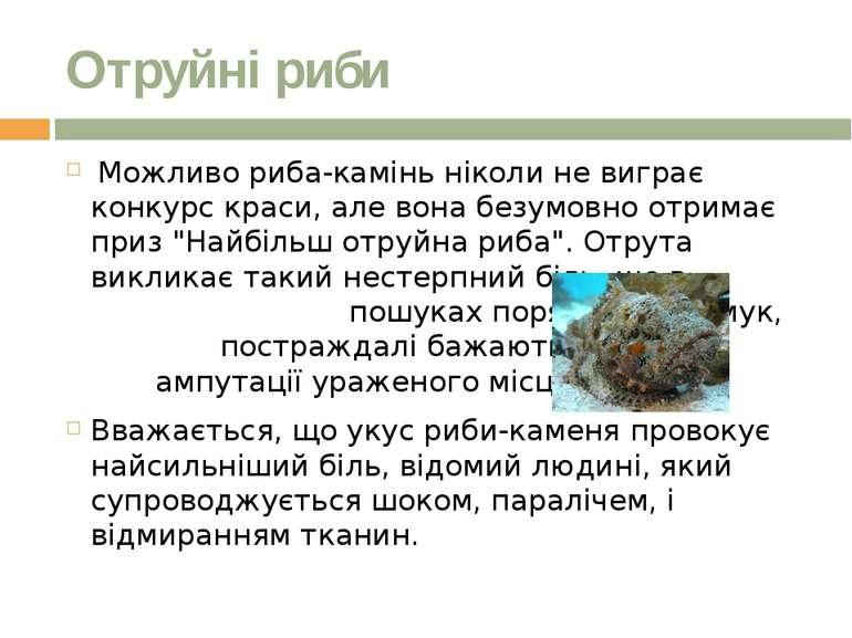 Отруйні риби Можливо риба-камінь ніколи не виграє конкурс краси, але вона бе...